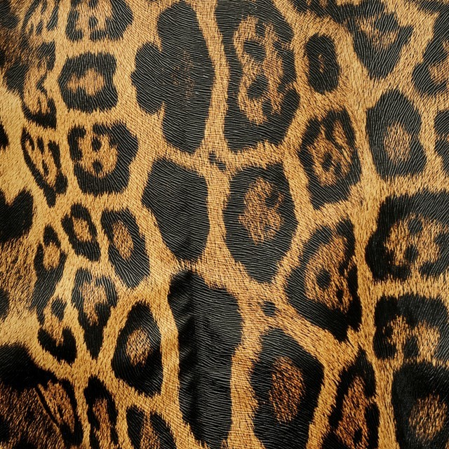 Animal Print Leo leather imitation stretch with hairstyle embossing | View: Animal Print Leo leather imitation stretch with hairstyle embossing